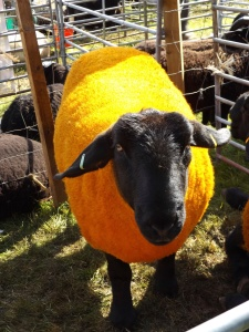 close up of a suffolk sheep dyed yellow